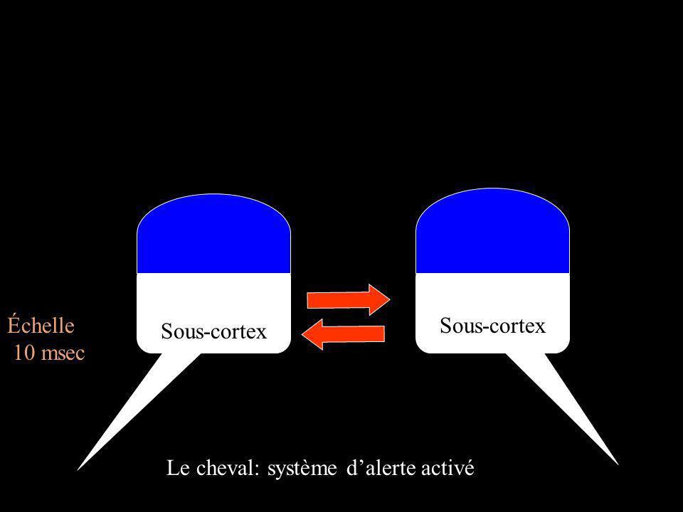 Cortex Sous-cortex Échelle 10 msec Le cheval: système dalerte activé