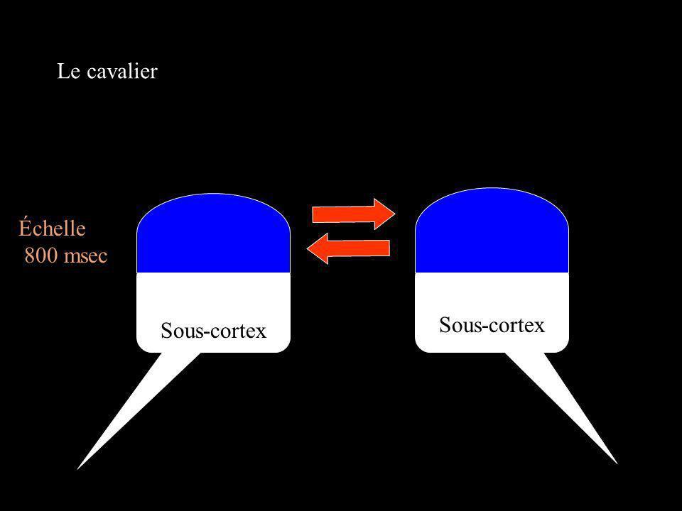 Cortex Sous-cortex Échelle 800 msec Le cavalier