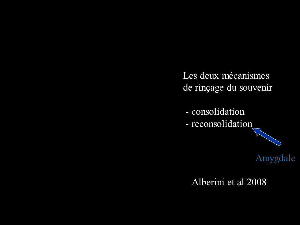 Les deux mécanismes de rinçage du souvenir - consolidation - reconsolidation Amygdale Alberini et al 2008