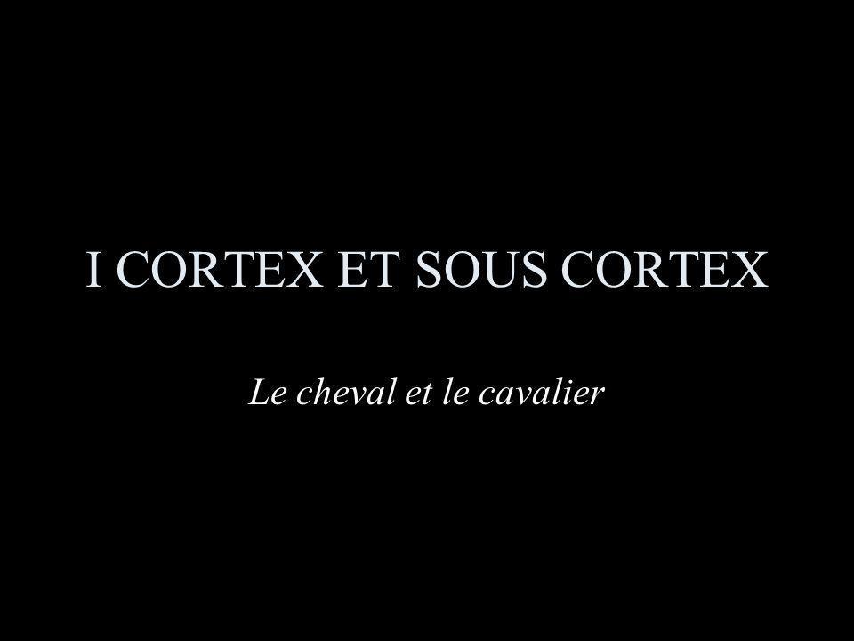 I CORTEX ET SOUS CORTEX Le cheval et le cavalier