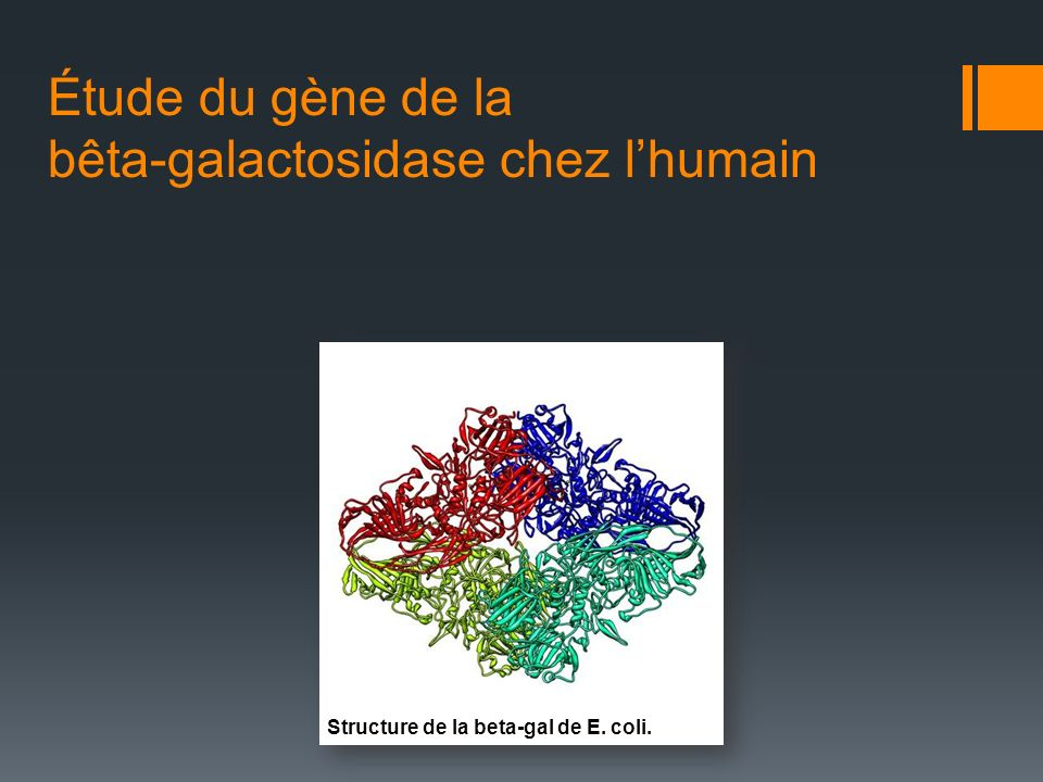 Étude du gène de la bêta-galactosidase chez lhumain Structure de la beta-gal de E. coli.