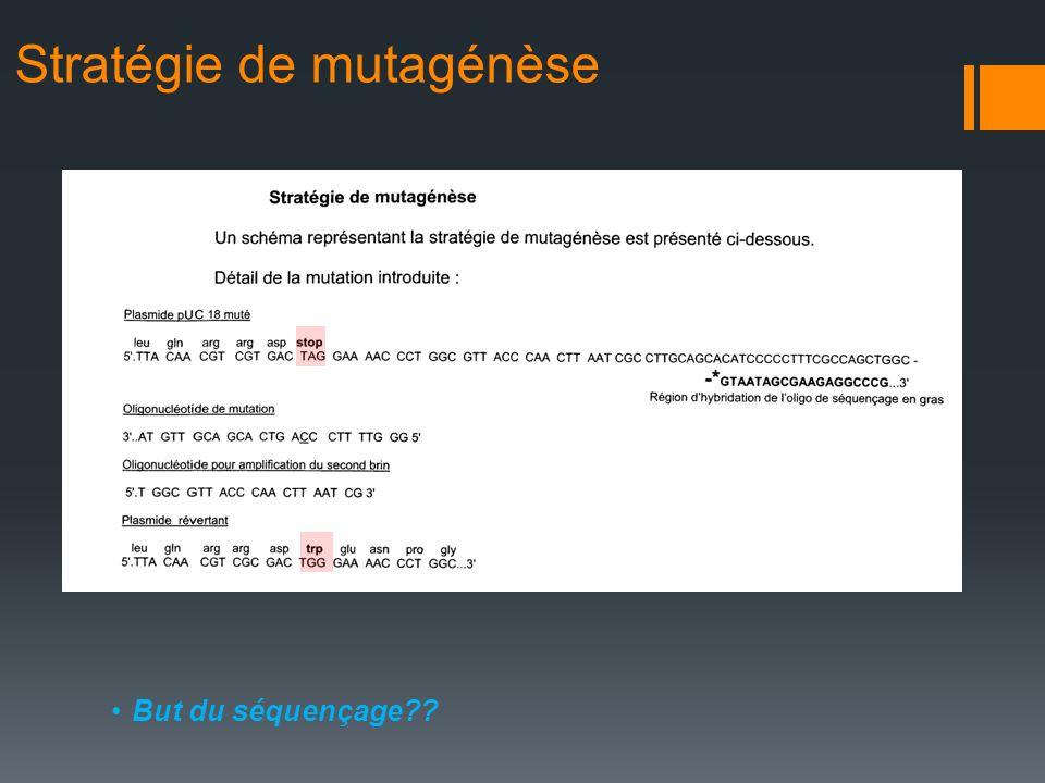 Stratégie de mutagénèse But du séquençage??