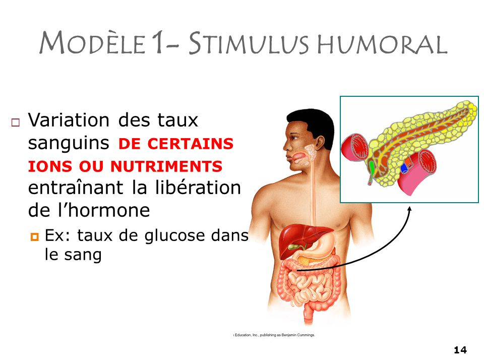 14 M ODÈLE 1- S TIMULUS HUMORAL Variation des taux sanguins DE CERTAINS IONS OU NUTRIMENTS entraînant la libération de lhormone Ex: taux de glucose dans le sang