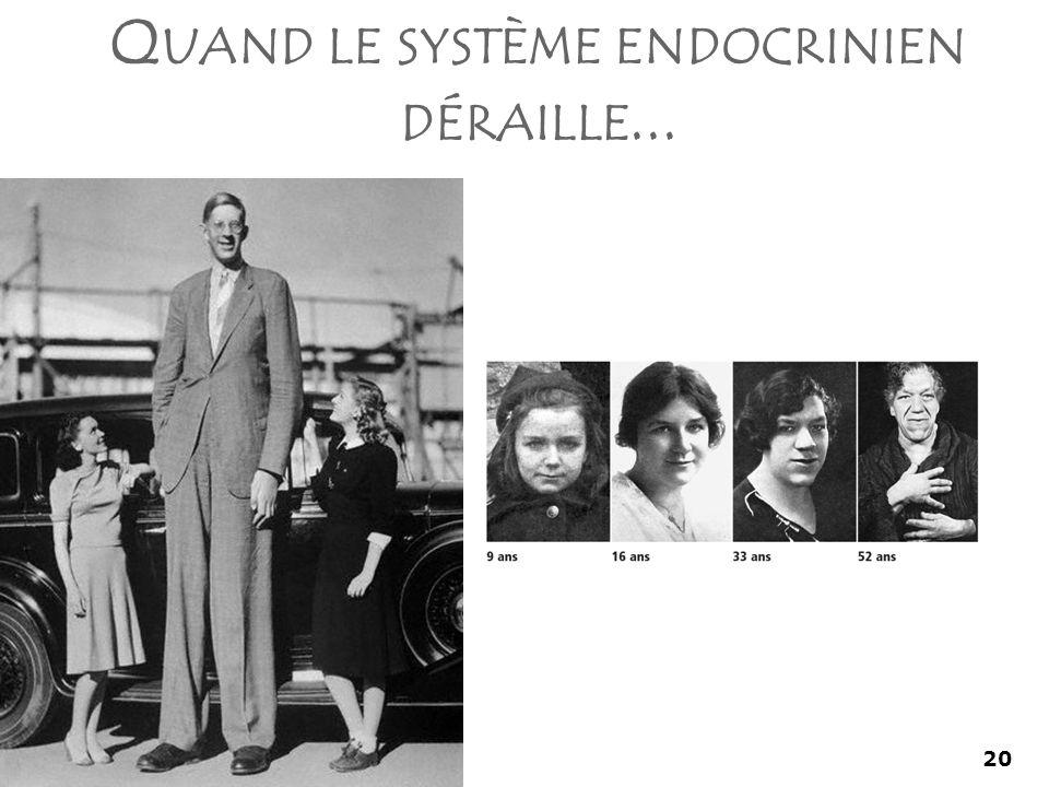 20 Q UAND LE SYSTÈME ENDOCRINIEN DÉRAILLE...