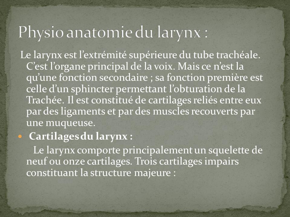 Le larynx est lextrémité supérieure du tube trachéale. Cest lorgane principal de la voix. Mais ce nest la quune fonction secondaire ; sa fonction prem