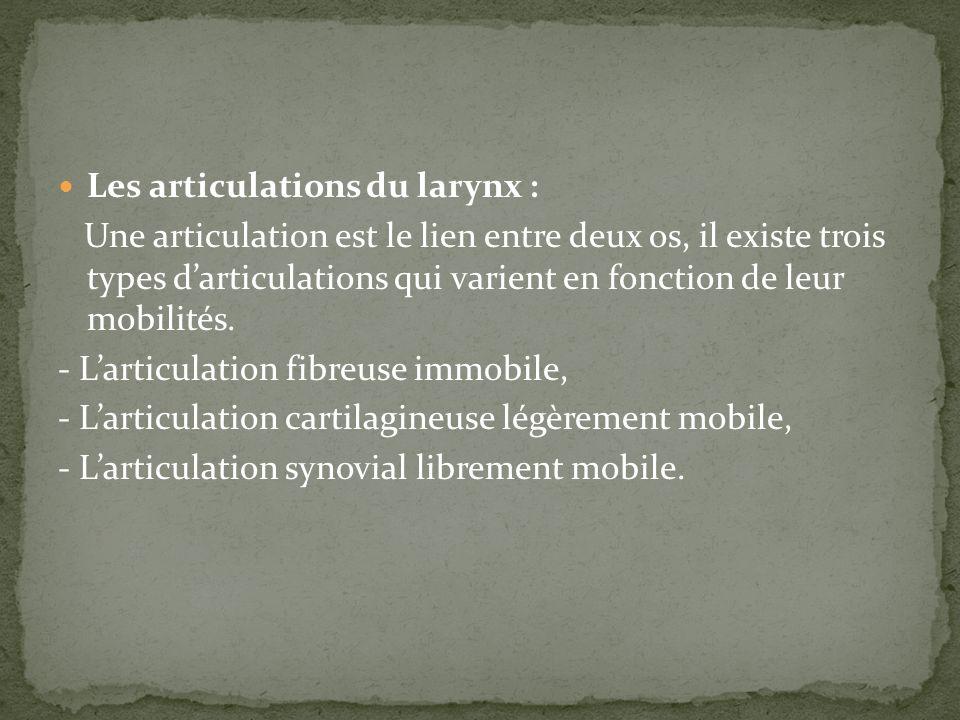 Les articulations du larynx : Une articulation est le lien entre deux os, il existe trois types darticulations qui varient en fonction de leur mobilit