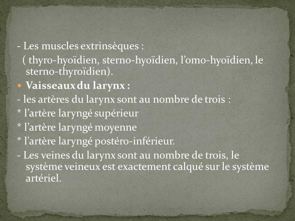 - Les muscles extrinsèques : ( thyro-hyoïdien, sterno-hyoïdien, lomo-hyoïdien, le sterno-thyroïdien). Vaisseaux du larynx : - les artères du larynx so