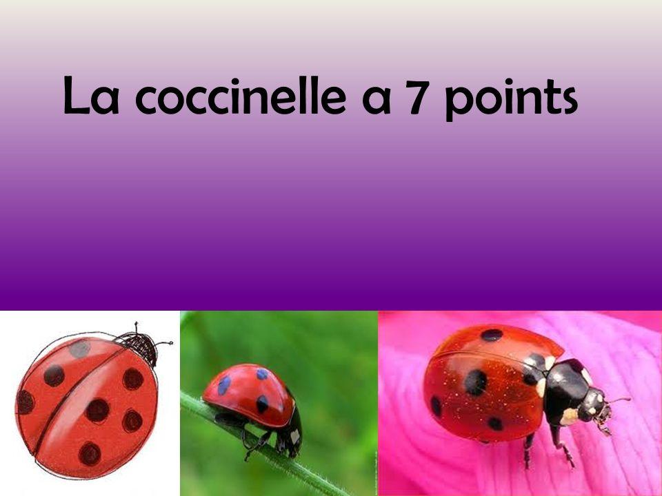 description de la coccinelle Mon insecte est la coccinelle 7points.