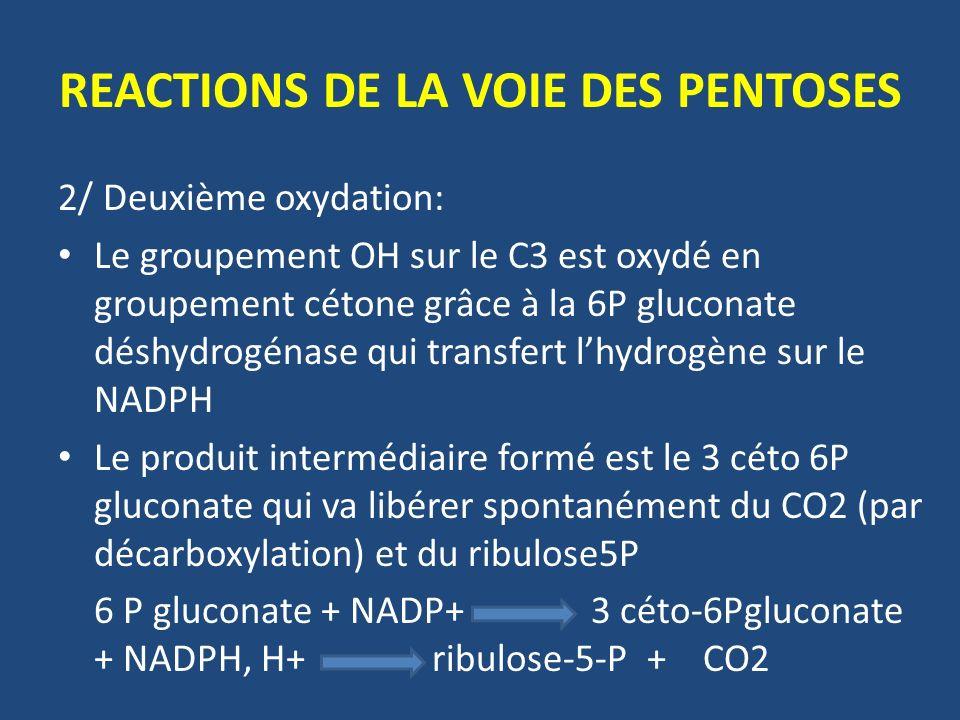 2/ Deuxième oxydation: Le groupement OH sur le C3 est oxydé en groupement cétone grâce à la 6P gluconate déshydrogénase qui transfert lhydrogène sur le NADPH Le produit intermédiaire formé est le 3 céto 6P gluconate qui va libérer spontanément du CO2 (par décarboxylation) et du ribulose5P 6 P gluconate + NADP+ 3 céto-6Pgluconate + NADPH, H+ ribulose-5-P + CO2