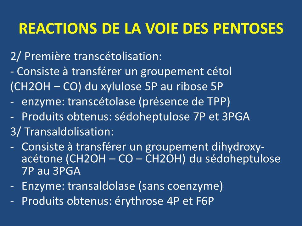 2/ Première transcétolisation: - Consiste à transférer un groupement cétol (CH2OH – CO) du xylulose 5P au ribose 5P -enzyme: transcétolase (présence de TPP) -Produits obtenus: sédoheptulose 7P et 3PGA 3/ Transaldolisation: -Consiste à transférer un groupement dihydroxy- acétone (CH2OH – CO – CH2OH) du sédoheptulose 7P au 3PGA -Enzyme: transaldolase (sans coenzyme) -Produits obtenus: érythrose 4P et F6P