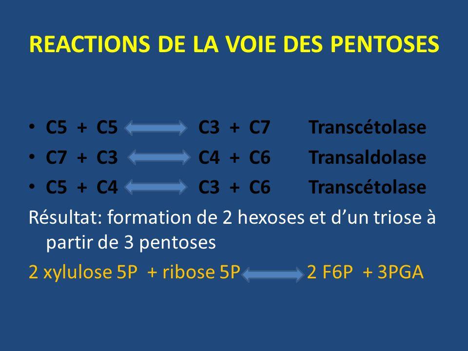 C5 + C5 C3 + C7 Transcétolase C7 + C3 C4 + C6 Transaldolase C5 + C4 C3 + C6 Transcétolase Résultat: formation de 2 hexoses et dun triose à partir de 3 pentoses 2 xylulose 5P + ribose 5P 2 F6P + 3PGA