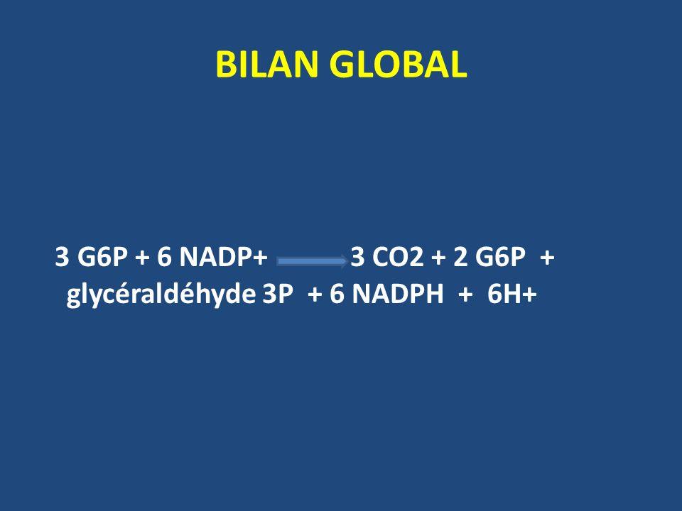 BILAN GLOBAL 3 G6P + 6 NADP+ 3 CO2 + 2 G6P + glycéraldéhyde 3P + 6 NADPH + 6H+