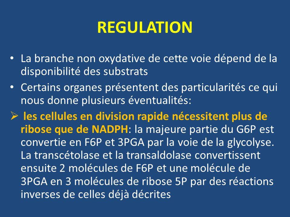 REGULATION La branche non oxydative de cette voie dépend de la disponibilité des substrats Certains organes présentent des particularités ce qui nous donne plusieurs éventualités: les cellules en division rapide nécessitent plus de ribose que de NADPH: la majeure partie du G6P est convertie en F6P et 3PGA par la voie de la glycolyse.