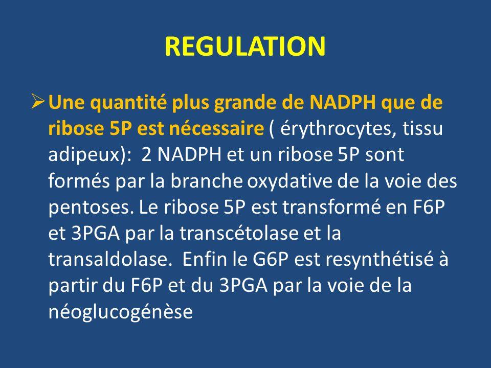Une quantité plus grande de NADPH que de ribose 5P est nécessaire ( érythrocytes, tissu adipeux): 2 NADPH et un ribose 5P sont formés par la branche oxydative de la voie des pentoses.