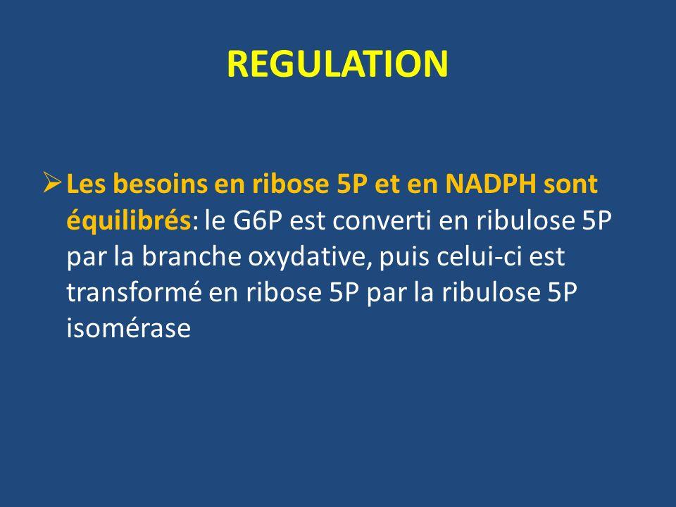 Les besoins en ribose 5P et en NADPH sont équilibrés: le G6P est converti en ribulose 5P par la branche oxydative, puis celui-ci est transformé en ribose 5P par la ribulose 5P isomérase