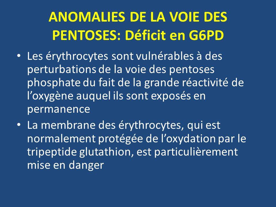 ANOMALIES DE LA VOIE DES PENTOSES: Déficit en G6PD Les érythrocytes sont vulnérables à des perturbations de la voie des pentoses phosphate du fait de la grande réactivité de loxygène auquel ils sont exposés en permanence La membrane des érythrocytes, qui est normalement protégée de loxydation par le tripeptide glutathion, est particulièrement mise en danger