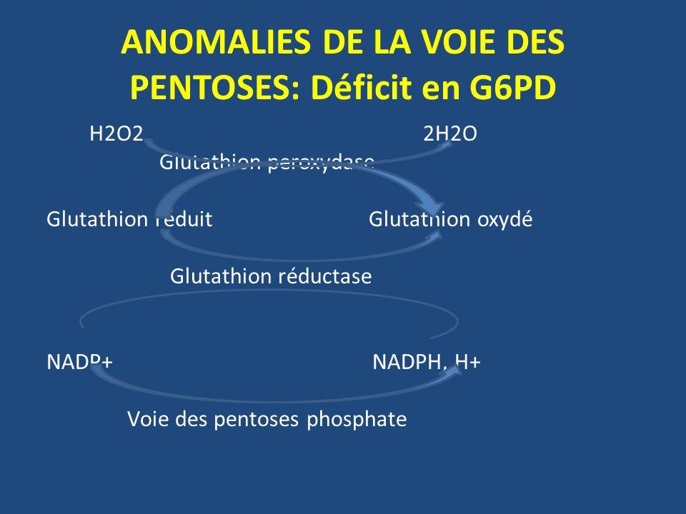 ANOMALIES DE LA VOIE DES PENTOSES: Déficit en G6PD H2O2 2H2O Glutathion peroxydase Glutathion réduit Glutathion oxydé Glutathion réductase NADP+ NADPH, H+ Voie des pentoses phosphate
