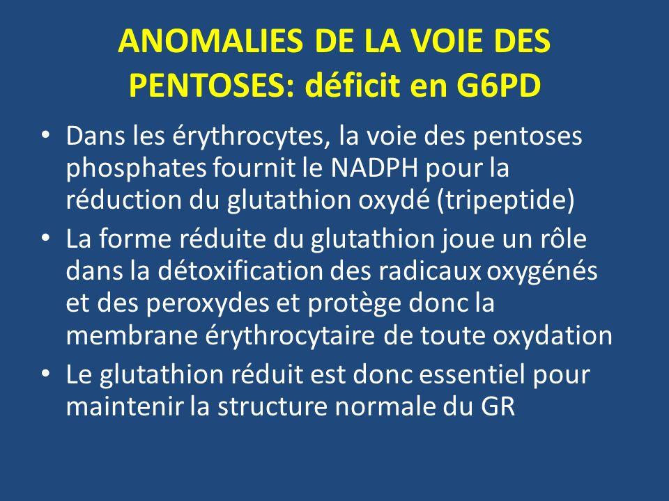 ANOMALIES DE LA VOIE DES PENTOSES: déficit en G6PD Dans les érythrocytes, la voie des pentoses phosphates fournit le NADPH pour la réduction du glutathion oxydé (tripeptide) La forme réduite du glutathion joue un rôle dans la détoxification des radicaux oxygénés et des peroxydes et protège donc la membrane érythrocytaire de toute oxydation Le glutathion réduit est donc essentiel pour maintenir la structure normale du GR