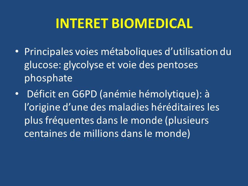 INTERET BIOMEDICAL Principales voies métaboliques dutilisation du glucose: glycolyse et voie des pentoses phosphate Déficit en G6PD (anémie hémolytique): à lorigine dune des maladies héréditaires les plus fréquentes dans le monde (plusieurs centaines de millions dans le monde)