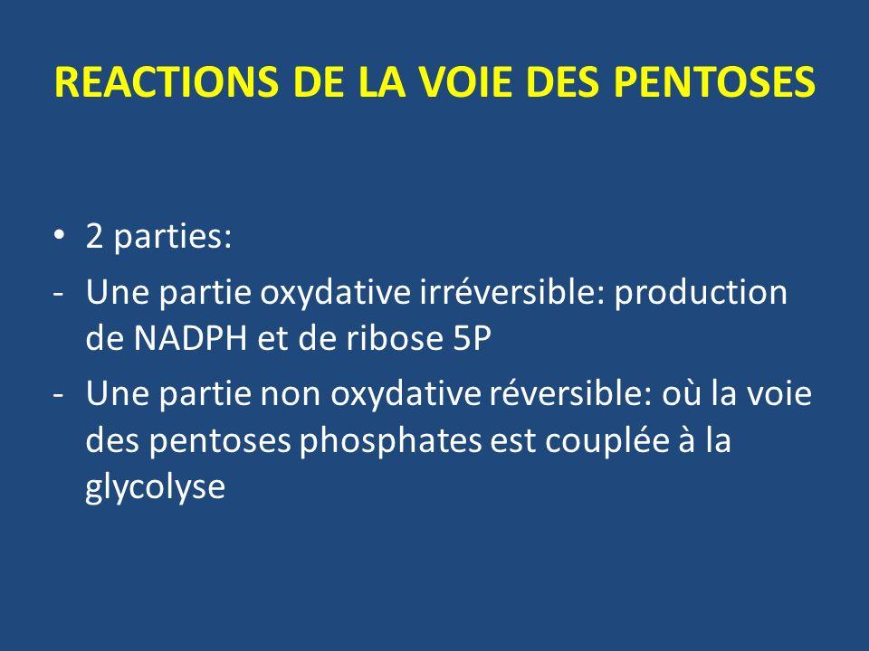 REACTIONS DE LA VOIE DES PENTOSES 2 parties: -Une partie oxydative irréversible: production de NADPH et de ribose 5P -Une partie non oxydative réversible: où la voie des pentoses phosphates est couplée à la glycolyse