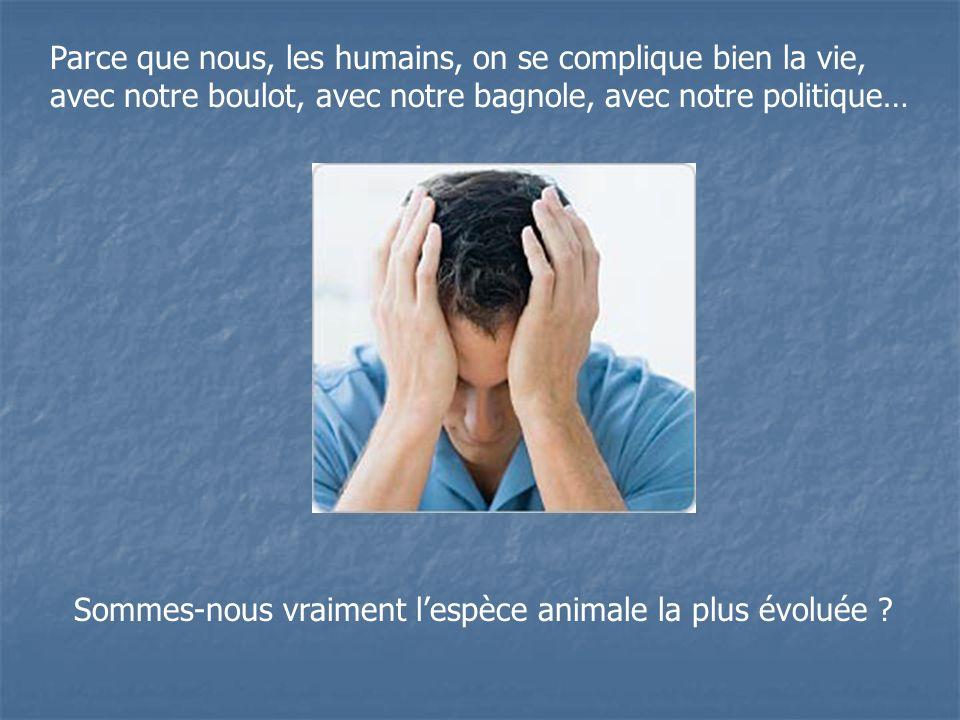 Parce que nous, les humains, on se complique bien la vie, avec notre boulot, avec notre bagnole, avec notre politique… Sommes-nous vraiment lespèce animale la plus évoluée ?