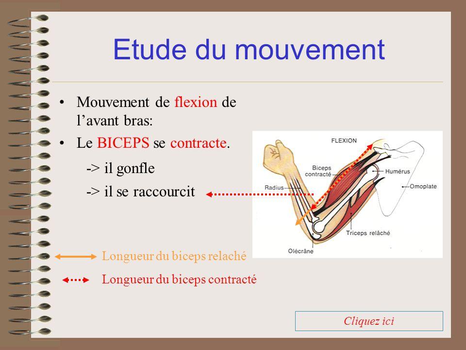 Mouvement de flexion de lavant bras: Le BICEPS se contracte. Etude du mouvement -> il se raccourcit Longueur du biceps relaché Longueur du biceps cont