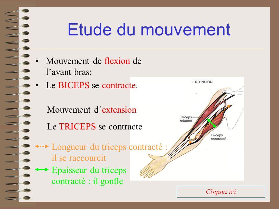 Etude du mouvement Cliquez ici Mouvement dextension Le TRICEPS se contracte Mouvement de flexion de lavant bras: Le BICEPS se contracte. Longueur du t