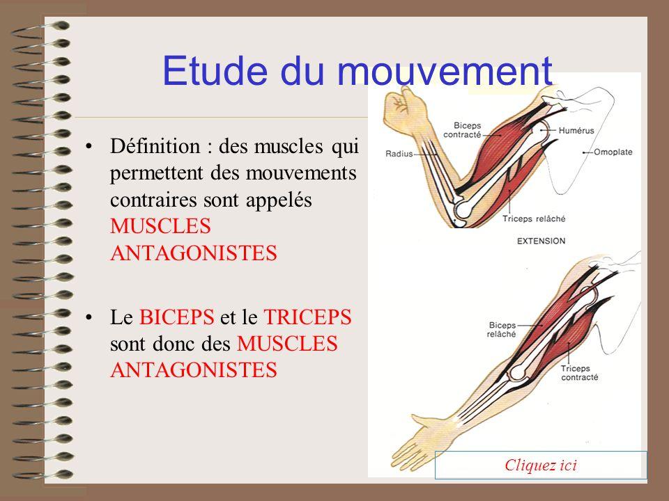 Définition : des muscles qui permettent des mouvements contraires sont appelés MUSCLES ANTAGONISTES Le BICEPS et le TRICEPS sont donc des MUSCLES ANTA
