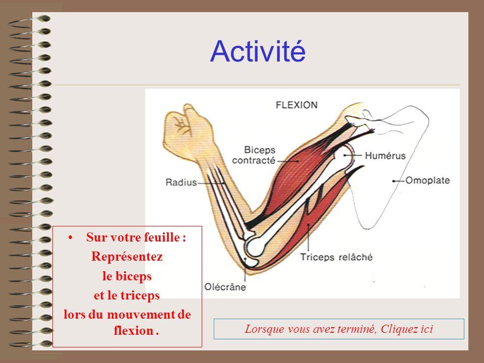 Activité Lorsque vous avez terminé, Cliquez ici Sur votre feuille : Représentez le biceps et le triceps lors du mouvement de flexion.