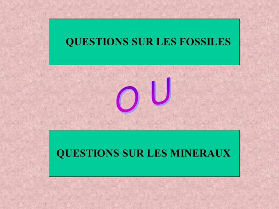 QUESTIONS SUR LES FOSSILES QUESTIONS SUR LES MINERAUX
