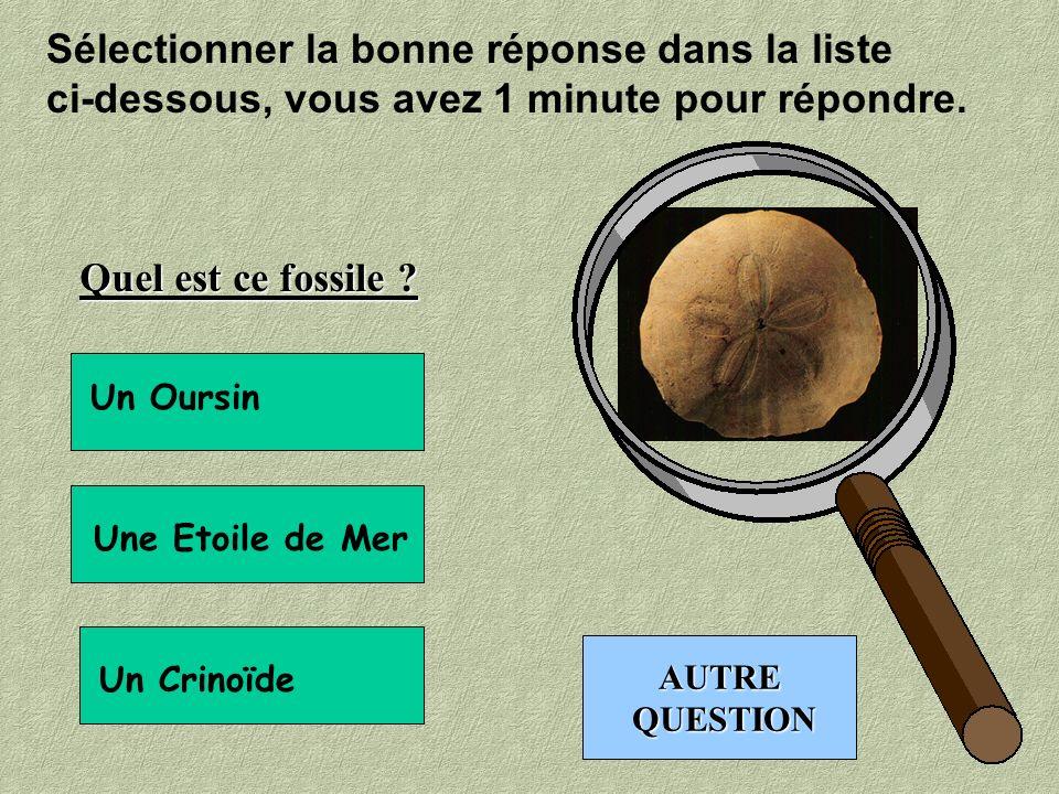 Sélectionner la bonne réponse dans la liste ci-dessous, vous avez 1 minute pour répondre. Cette dent a appartenue à un : Mammifère Requin Dinosaure AU
