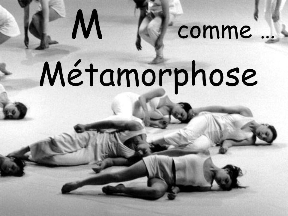 M comme … Métamorphose