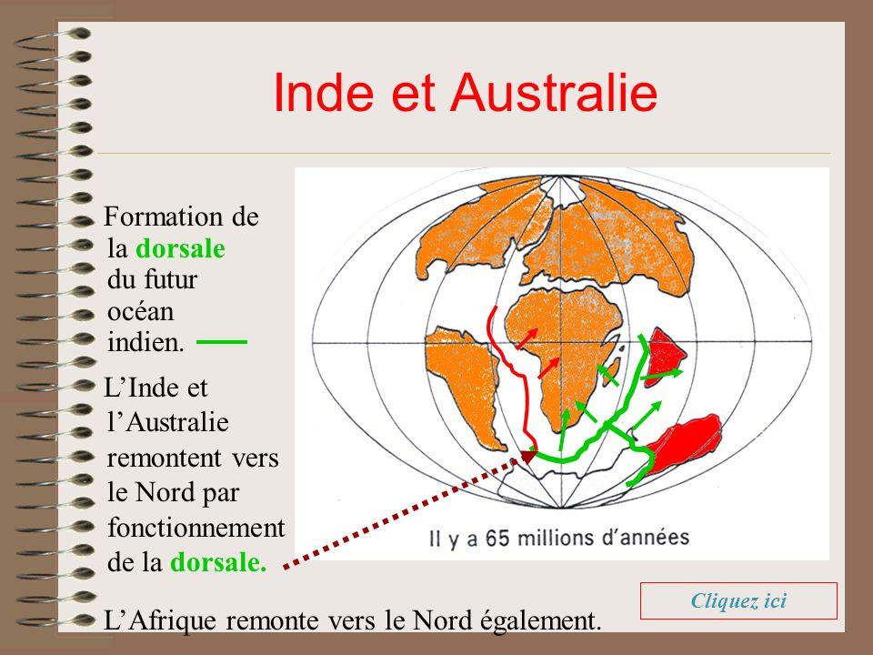 Inde et Australie Formation de la dorsale du futur océan indien. LInde et lAustralie remontent vers le Nord par fonctionnement de la dorsale. LAfrique