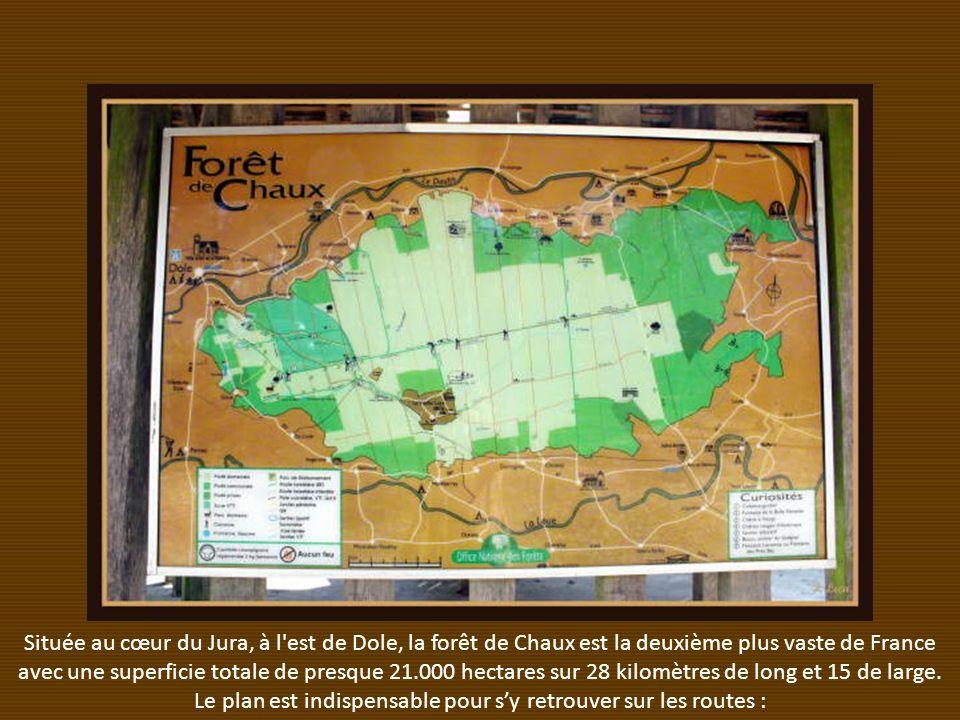 Située au cœur du Jura, à l est de Dole, la forêt de Chaux est la deuxième plus vaste de France avec une superficie totale de presque 21.000 hectares sur 28 kilomètres de long et 15 de large.