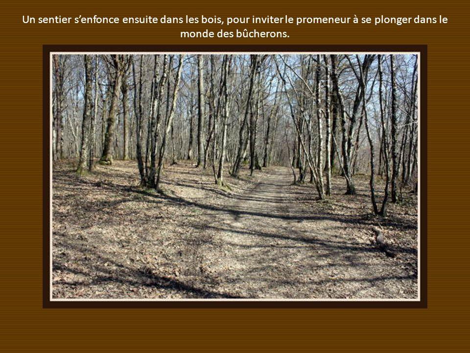 Un sentier senfonce ensuite dans les bois, pour inviter le promeneur à se plonger dans le monde des bûcherons.