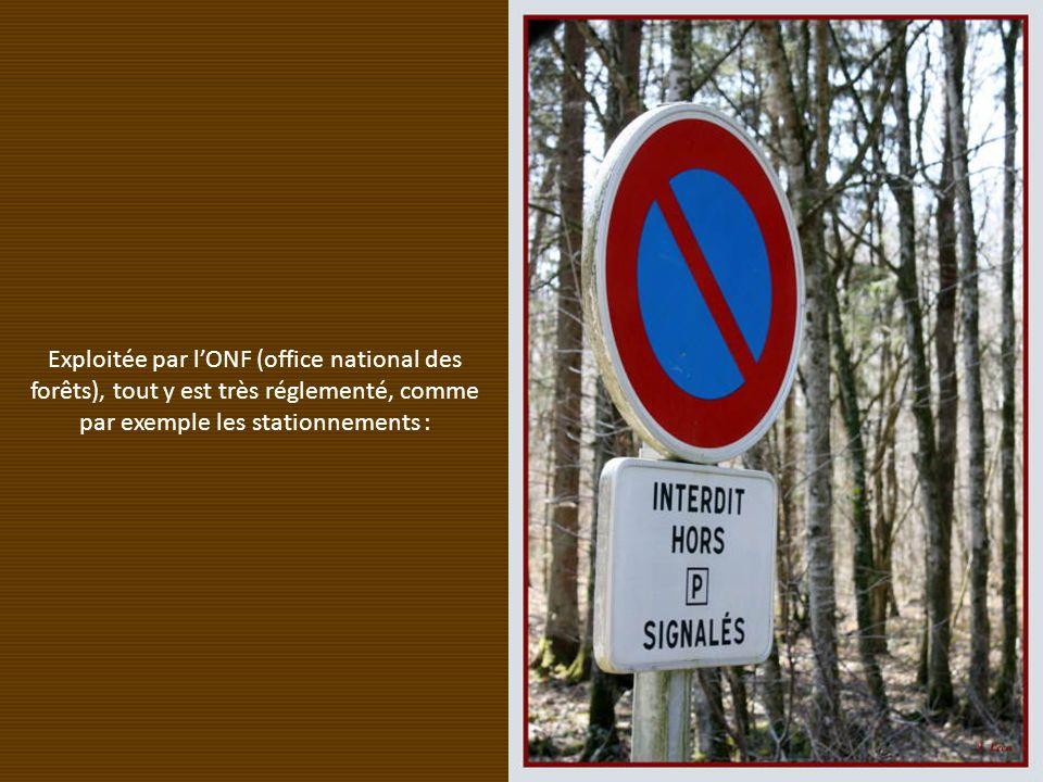 Exploitée par lONF (office national des forêts), tout y est très réglementé, comme par exemple les stationnements :
