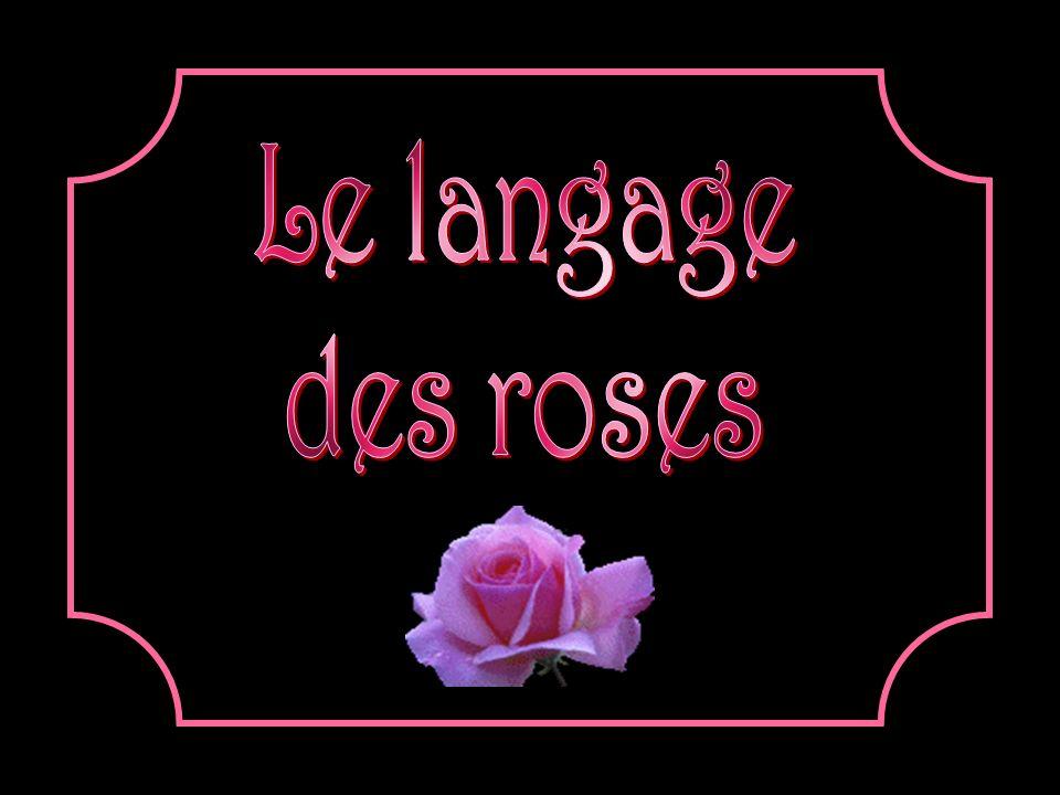 La rose orange signifie la beauté.