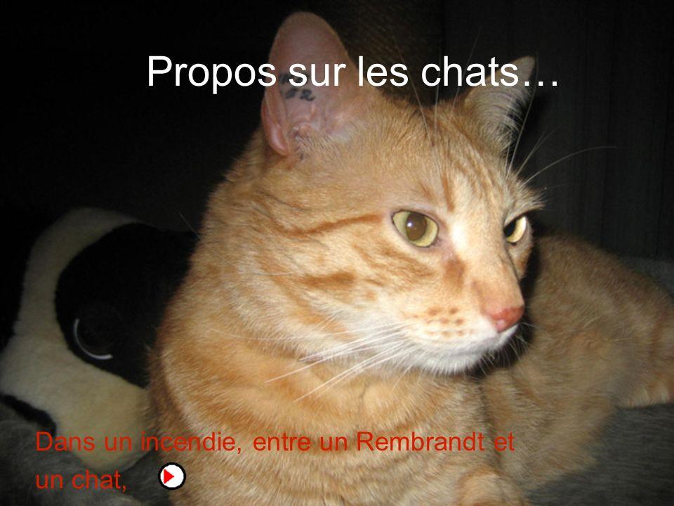 Propos sur les chats… Dans un incendie, entre un Rembrandt et un chat,