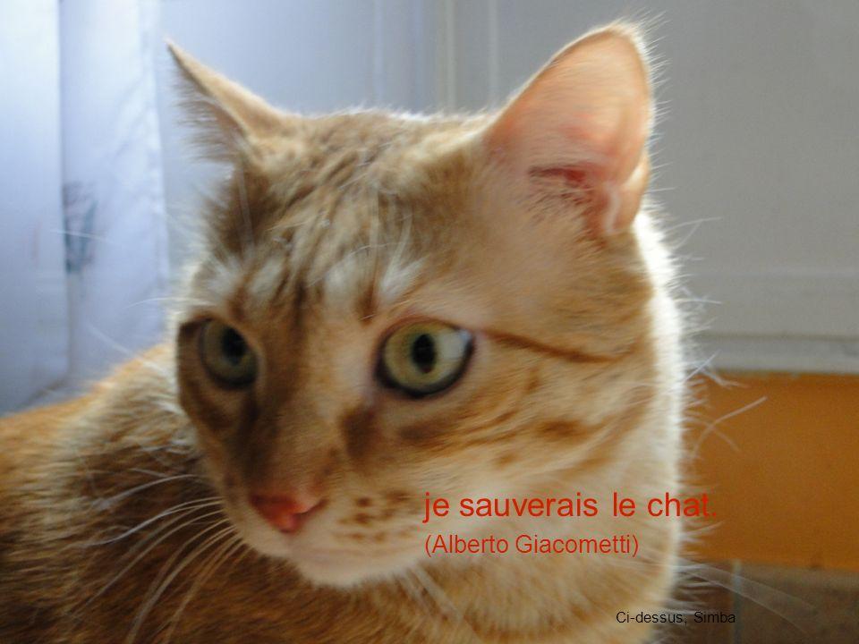 je sauverais le chat. (Alberto Giacometti) Ci-dessus, Simba