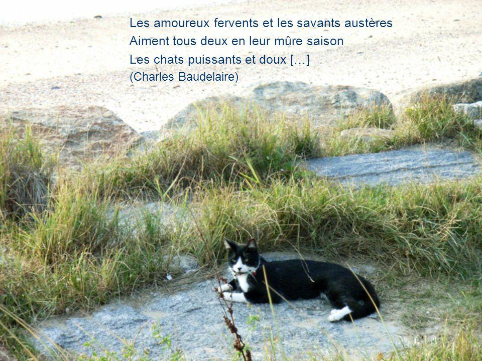 Les amoureux fervents et les savants austères Aiment tous deux en leur mûre saison Les chats puissants et doux […] (Charles Baudelaire)