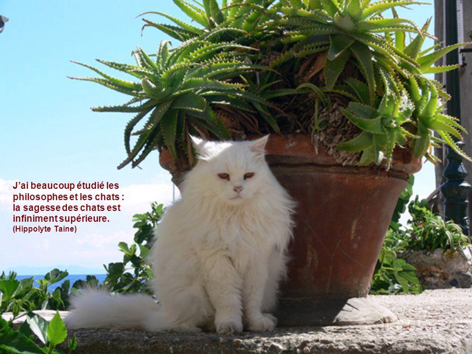 Jai beaucoup étudié les philosophes et les chats : la sagesse des chats est infiniment supérieure.