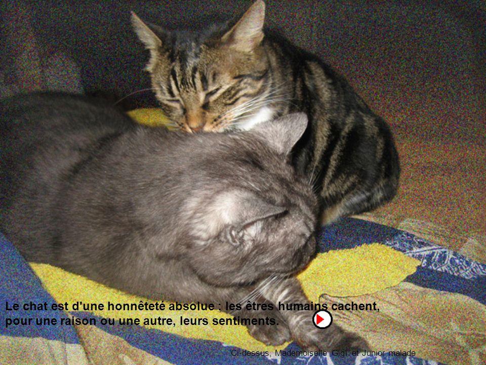 Le chat est d une honnêteté absolue : les êtres humains cachent, pour une raison ou une autre, leurs sentiments.