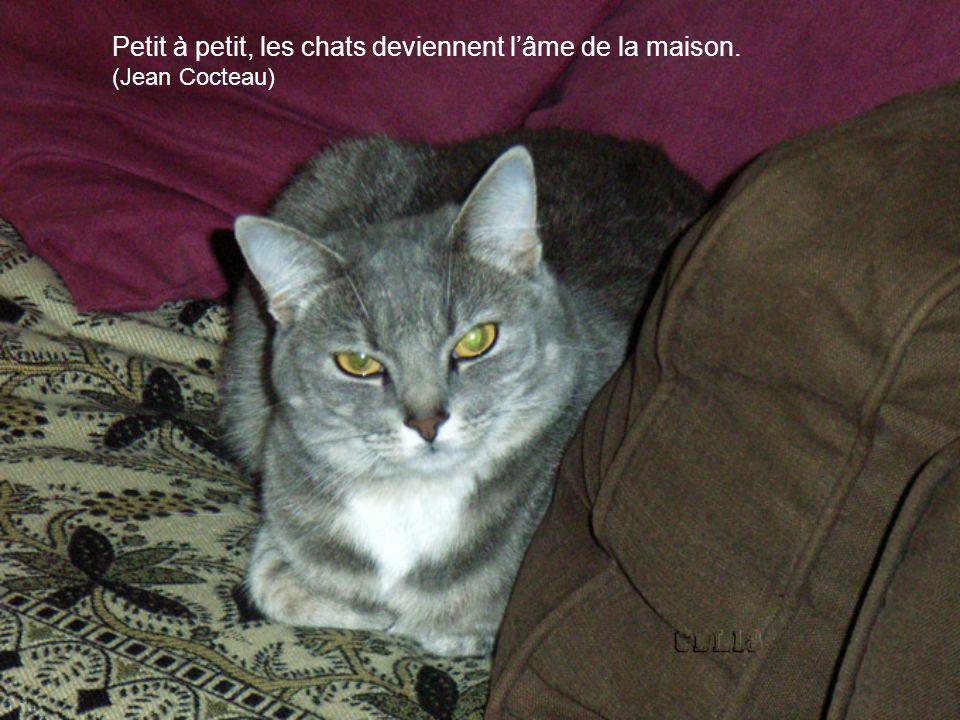 Petit à petit, les chats deviennent lâme de la maison. (Jean Cocteau)