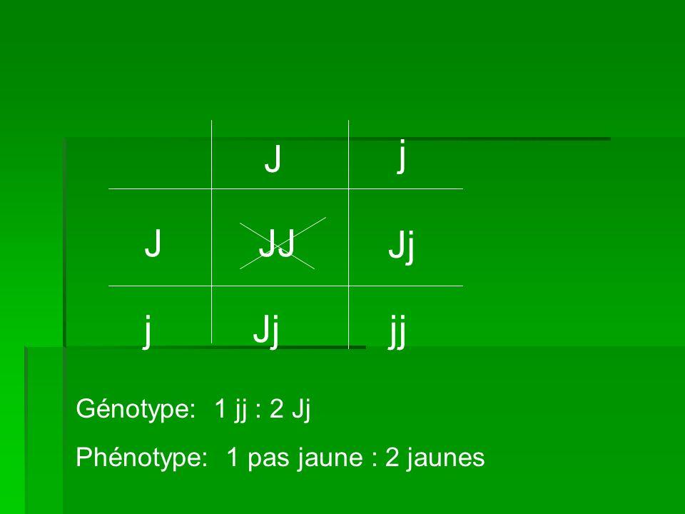 J j J j JJ Jj jj Génotype: 1 jj : 2 Jj Phénotype: 1 pas jaune : 2 jaunes