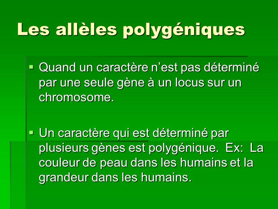 Les allèles polygéniques Quand un caractère nest pas déterminé par une seule gène à un locus sur un chromosome. Quand un caractère nest pas déterminé