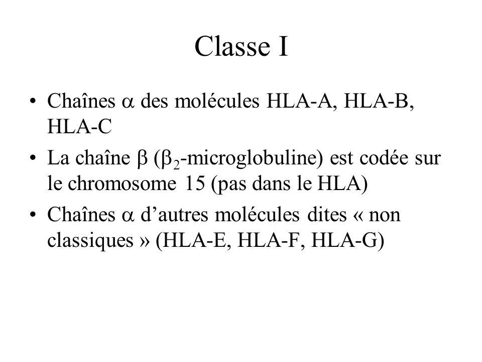 Classe I Chaînes des molécules HLA-A, HLA-B, HLA-C La chaîne ( 2 -microglobuline) est codée sur le chromosome 15 (pas dans le HLA) Chaînes dautres mol