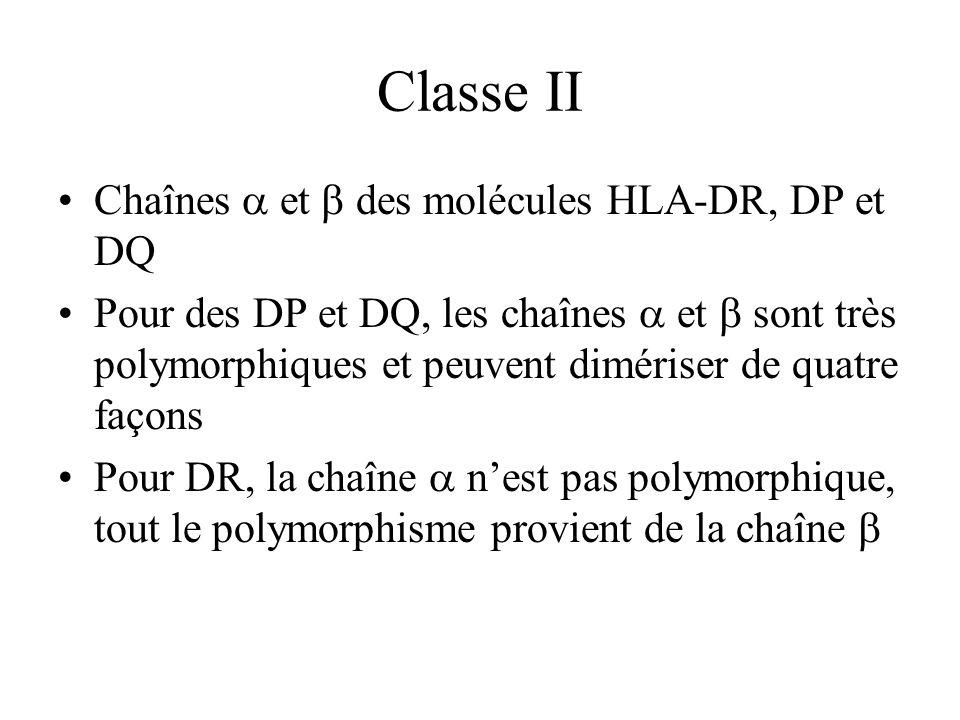 Classe II Chaînes et des molécules HLA-DR, DP et DQ Pour des DP et DQ, les chaînes et sont très polymorphiques et peuvent dimériser de quatre façons P