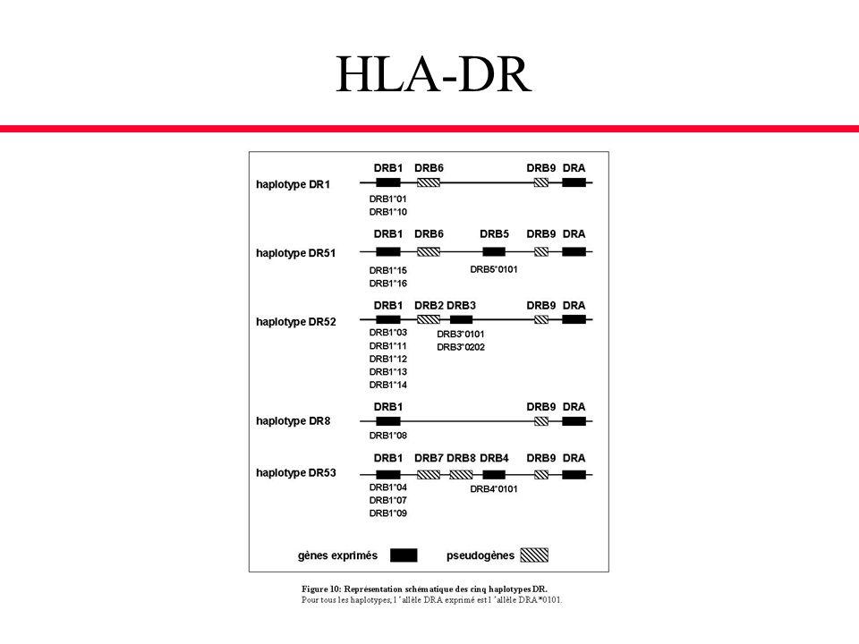 HLA-DR