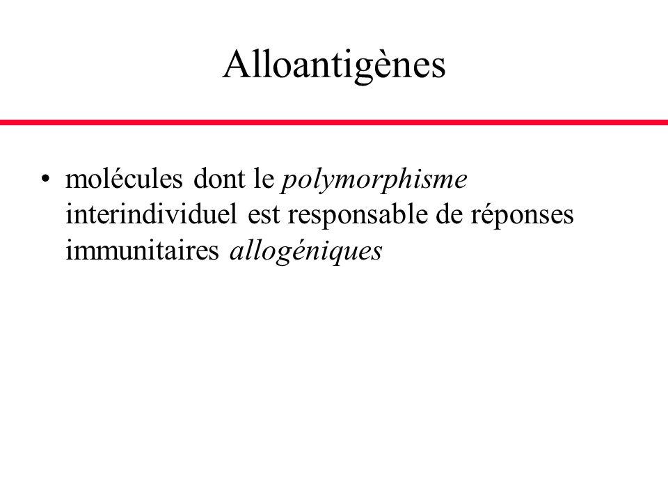 Alloantigènes molécules dont le polymorphisme interindividuel est responsable de réponses immunitaires allogéniques