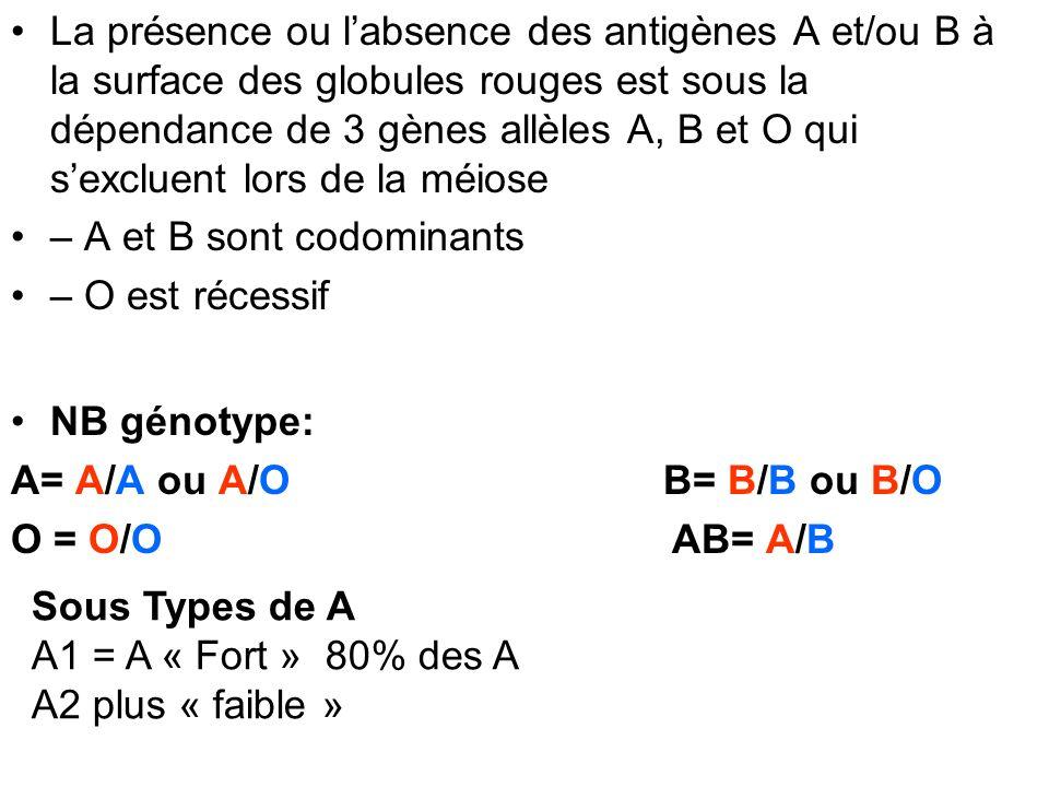 La présence ou labsence des antigènes A et/ou B à la surface des globules rouges est sous la dépendance de 3 gènes allèles A, B et O qui sexcluent lor